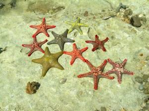 Starfish-&-Underwater