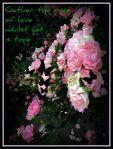 roses99
