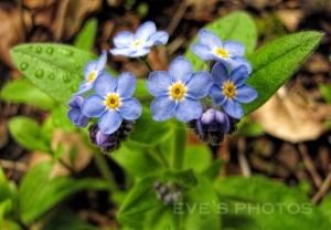 houseflowers