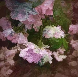 roses in summer - my garden