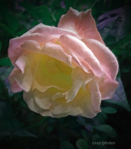 """Abstract  """"Rose"""""""