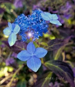 blueglass8