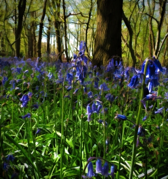 painterly style - bluebells